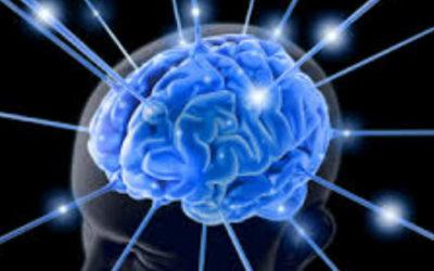 Comment se développe le cerveau du tout-petit